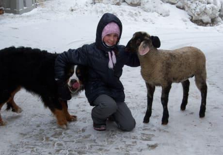 Schaf und Candy