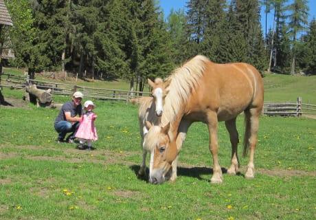 Unsere Haflingerstute Antea mit dem kleinen Attila