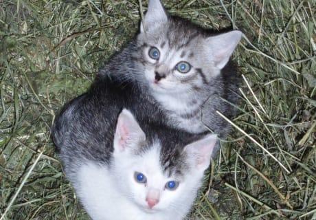 Kätzchen im Heu