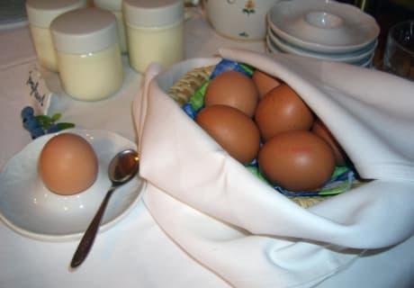 Bio-Eier von Fam. Maier aus Neumarkt