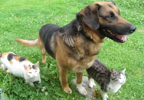 Hund und Katzen in bestem Einvernehmen
