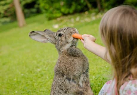 Brownie liebt Karotten :-)