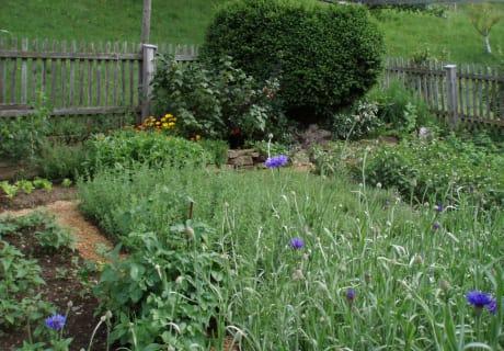 Unser Kräutergarten