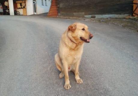 Unser treuer Familienhund Lacky