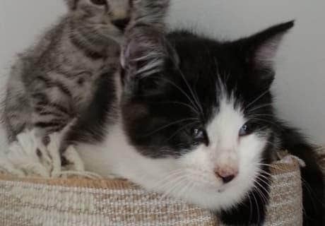 verträumte Katzenbabies