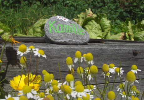 Aus dem kleinen Kräutergarten