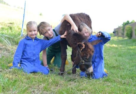 Kinder lieben Tiere