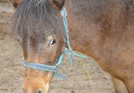 Chrissy unsere Ponystute