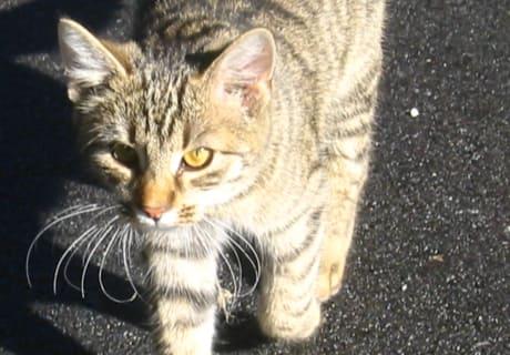 """Katze """"Wiskey"""""""