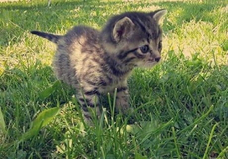 Streicheltiere Katzen Ferien am Kinderbauernhof