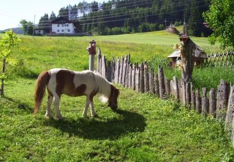 Unser Pony Mucky