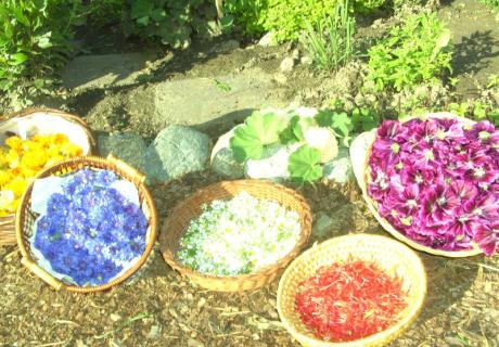 Kräuter und Blüten - Grundlage für meine Kräutertees