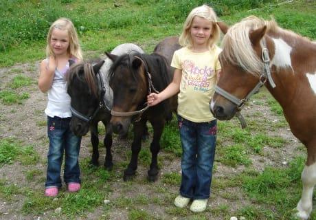 Tini, Rico und Elvis unsere Ponys
