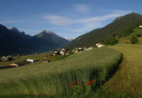 Biogetreide von den Feldern des Kassnhofes