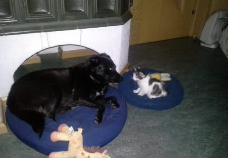 "Hofhündin ""Ella"" und unser süßes Kätzchen ""Paula"""