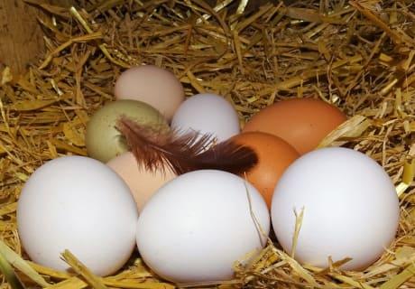Frische Eier von unseren lieben Hennen