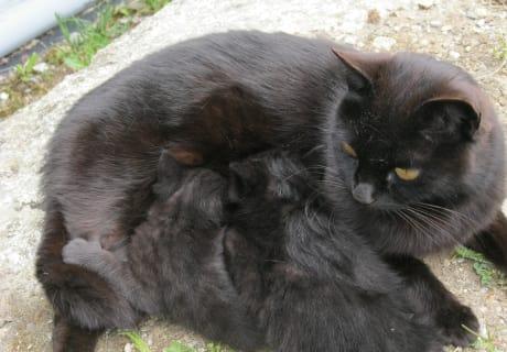 Katzenmutti
