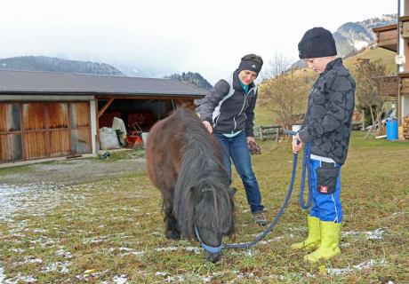 """Unser Pony """"Blacky"""" wird ausgeführt"""