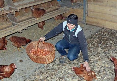 Unsere Legehühner