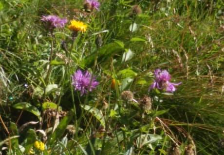 wunderbare Blumenwiesen im Defereggental