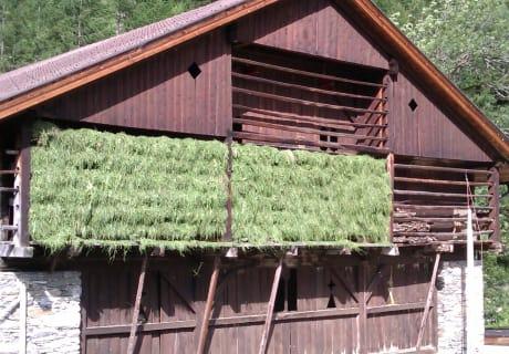 Futterhaus, Stall
