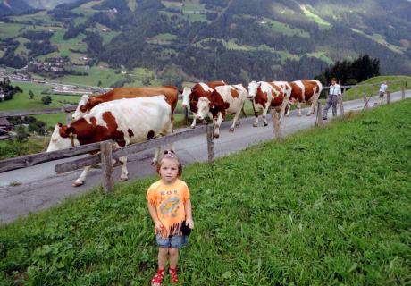 Beim Kühe von der Weide holen