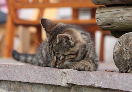 Katze Lena