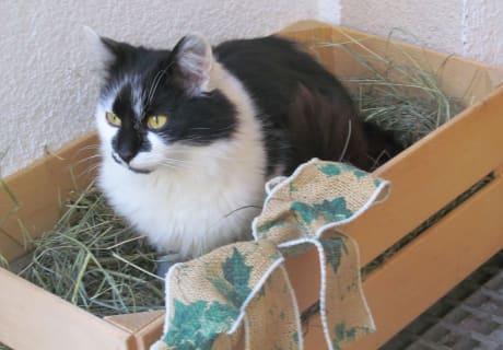 unsere Hauskatze Lana