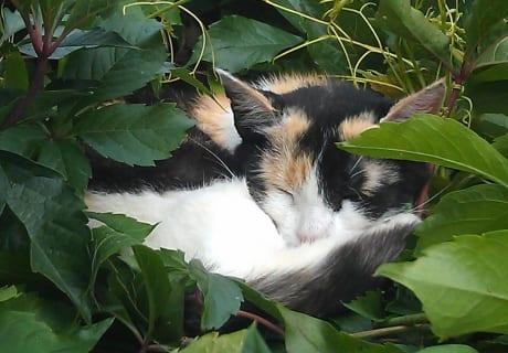 Blinki genießt die wohltuende Ruhe