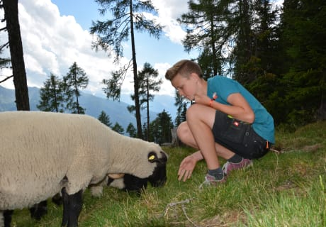 Schaf füttern auf der Alm