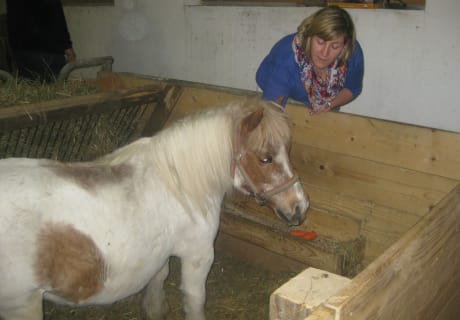 Jipsy - unsere Pony