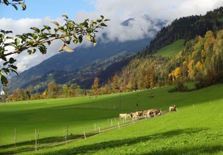 im Herbst auf der Weide