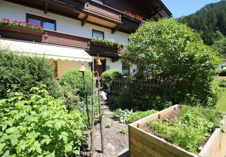 Kräuter frisch aus dem Garten