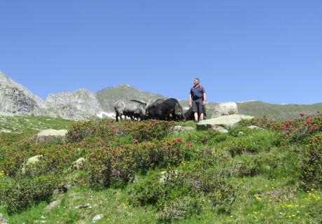 Kontrollbesuch auf der Bodenalm unser Schafherde