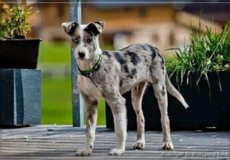 Haus- und Hofhund Prinz