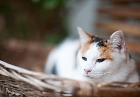 """Katze """"Mitzi"""""""