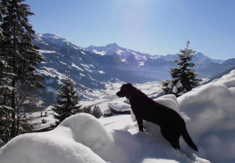 Unser Hund Lucky Urlaub am Bauernhof Zell im Zillertal