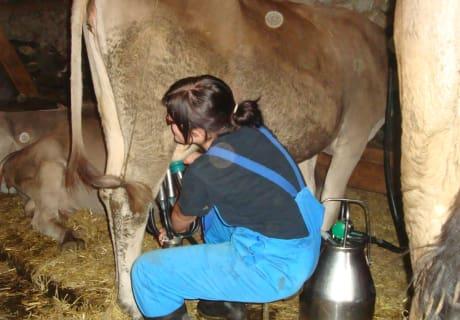 Stefanie auf unserer Alm beim Melken echter Urlaub am Bauernhof