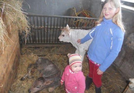 Die Kälbchen bekommen Besuch am Hanserhof