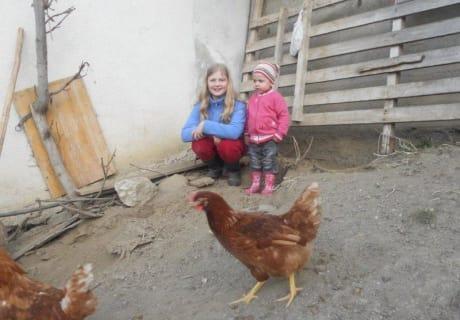 Kinder bei den Hühnern