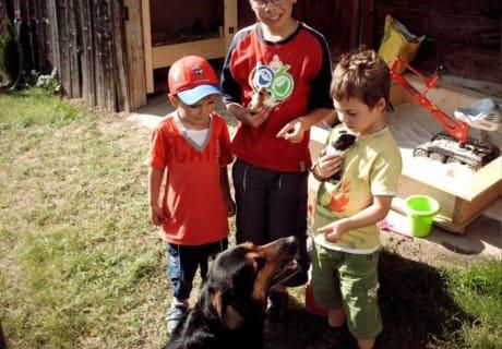 Kinder mit Mehrschweinchen