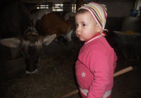 Das Füttern der Kühe