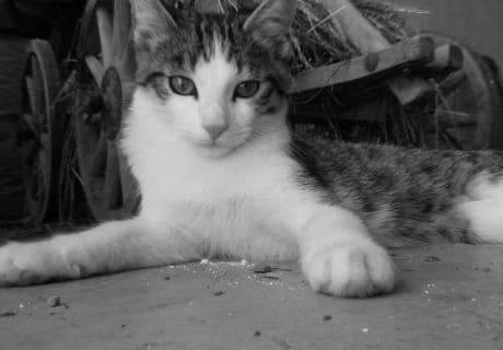 """Katze """"Maunz"""""""