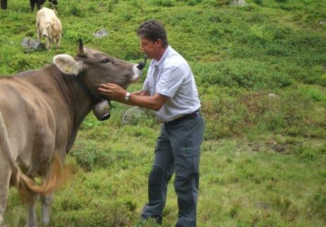 Herwig besucht das Vieh auf der Alpe