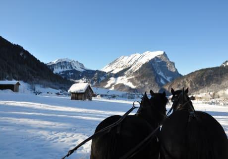 Pferdeschlittenfahrten in Au
