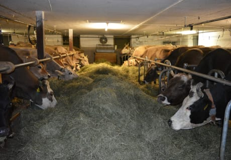 Heu mit richtigen Bergkräutern für unsere Kühe