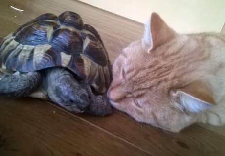 Emma und Peppi