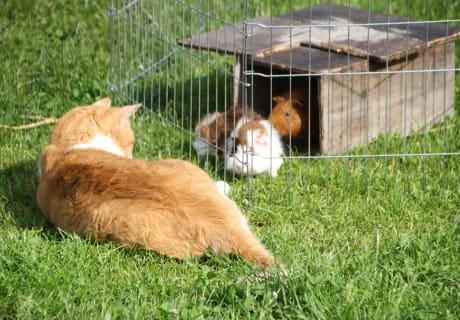 Mitzi mit den kleinen Freunden
