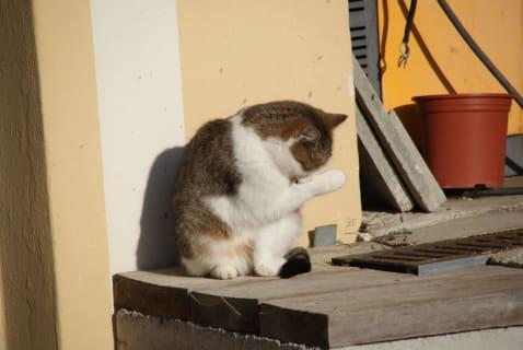 Katze Lili