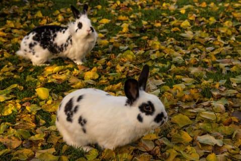 unsere Kaninchen